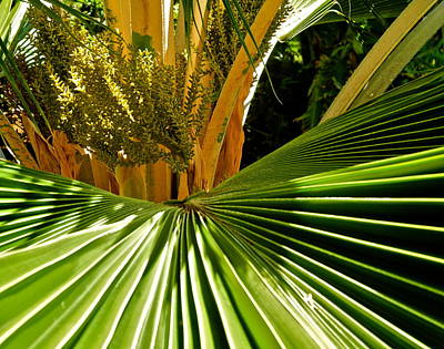 Photograph - Parts Of A Palm Tree by Kirsten Giving