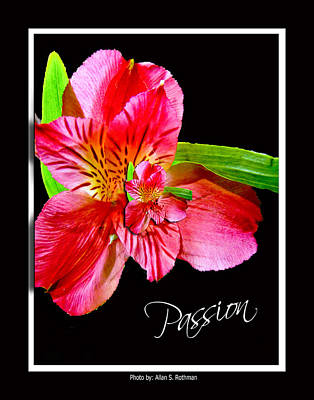 Photograph - Passion by Allan Rothman