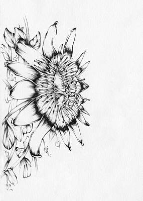 Passion Vine Drawing - Passion Flower by Christopher Lem