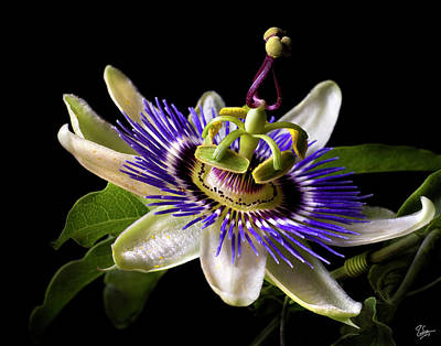 Photograph - Passion Flower by Endre Balogh