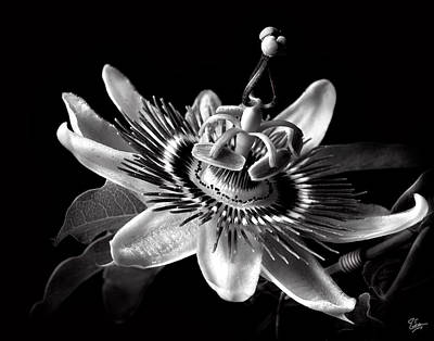 Photograph - Passion Flower In Black And White by Endre Balogh