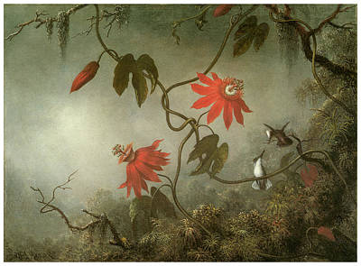 Hummingbird Painting - Passion Flowers And Hummingbirds by Martin Johnson Heade