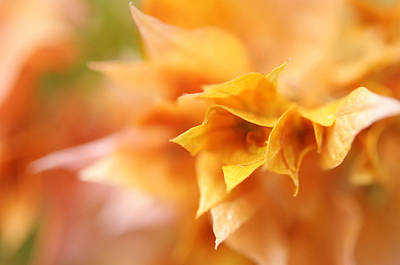 D300 Photograph - Passion For Flowers. Orange Delight by Jenny Rainbow