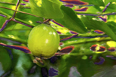 Passion Fruit Painting - Passion Fruit by Miguel Pumarejo