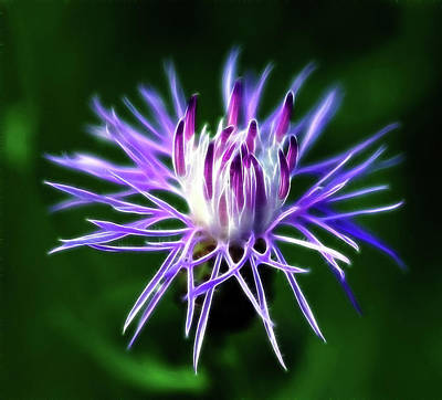 Knapweed Photograph - Passionately Purple by Bill Morgenstern