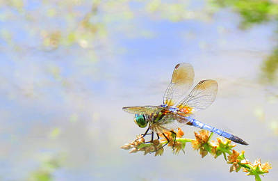 Photograph - Pastel Dragonfly by Deborah Smith
