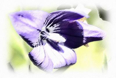 Pastel Iris Print by Susan Leggett