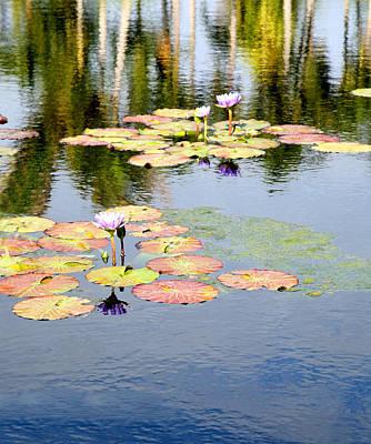 Photograph - Pastel Lilies by Carol Kinkead