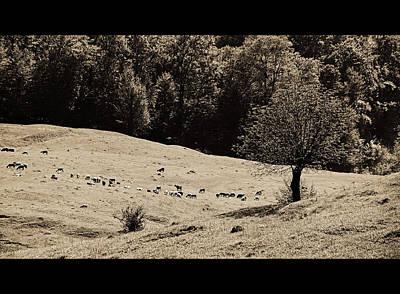 Photograph - Pastoral Landscape by Bogdan M Nicolae