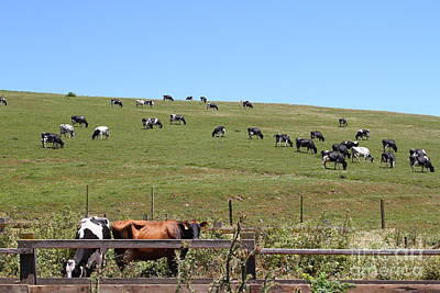 Pastoral Landscape Of Point Reyes California . 7d15962 Art Print