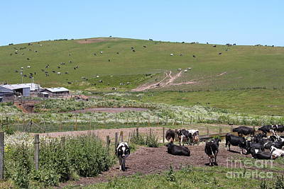 Pastoral Landscape Of Point Reyes California . 7d15964 Art Print