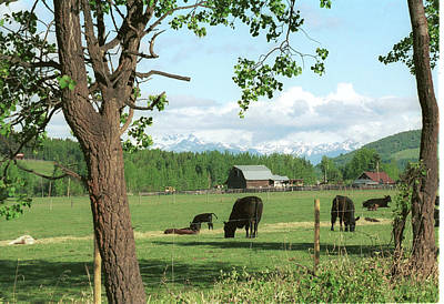 Photograph - Pastoral Serenity by Jan Piet