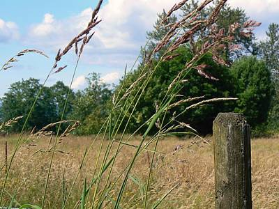 Art Print featuring the photograph Pasture Grass by Pamela Patch
