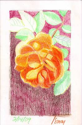 Austin Drawing - Pat Austin Rose by Rod Ismay