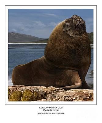 Sea Lion Digital Art - Patagonian Sea Lion Bull by Owen Bell