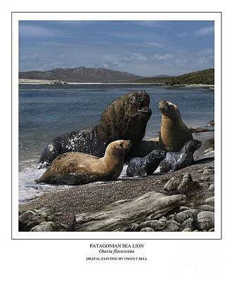 Sea Lion Digital Art - Patagonian Sea Lion Bull With Harem And Pups by Owen Bell