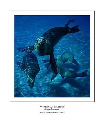 Sea Lion Digital Art - Patagonian Sea Lions by Owen Bell