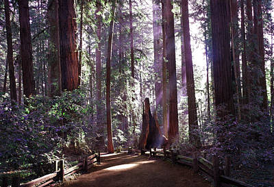 State Parks Digital Art - Path By An Ancient Redwood by Laura Iverson