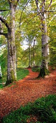 Photograph - Path In Cawdor Big Wood by Joe Macrae