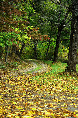 Photograph - Path In The Forest In Autumn by Emanuel Tanjala