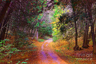 Photograph - Path In The Woods by Anne Raczkowski