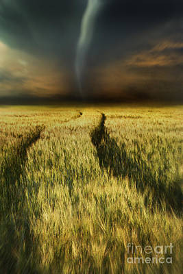 Photograph - Path In Wheat Fields With Storm Looming by Sandra Cunningham