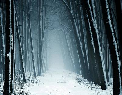 Winter Landscapes Photograph - Path Into Snowy Forest On Foggy Day by By Julie Mcinnes