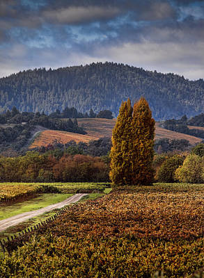 Road Paint Photograph - Path Leading To Two Large Trees In Vineyard by Bob Cornelis