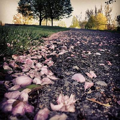 Pathway Photograph - Path To Heaven II #flowers #petals by Jess Gowan