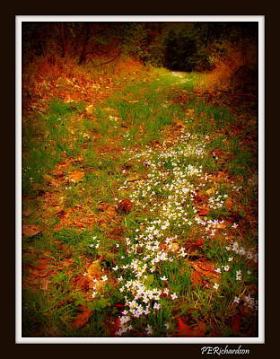Photograph - Path To Wonders by Priscilla Richardson