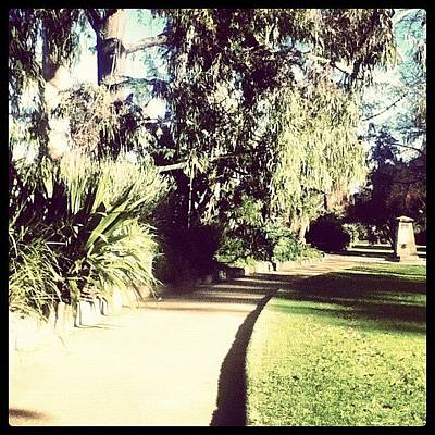 Pathway Photograph - Path #trees #tree #pathway #gardens by Ryan Evans