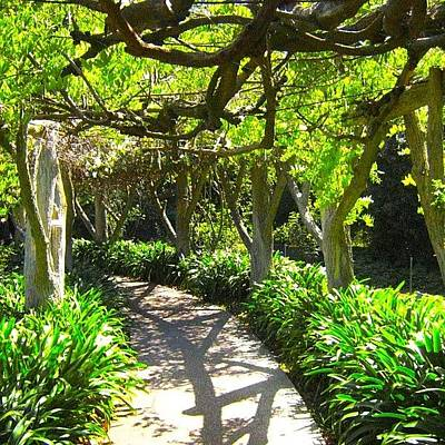 Pathway Photograph - Pathway #pathway #canopy #arbor by Mark Jackson