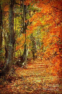 Photograph - Pathway Through Autumn Woods by Cheryl Davis