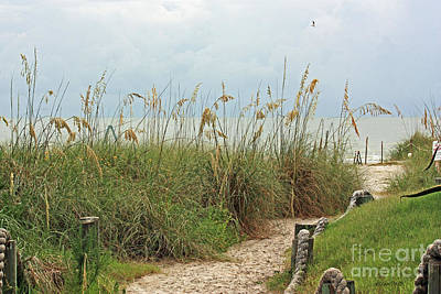 Photograph - Pathway To The Gulf by Terri Mills