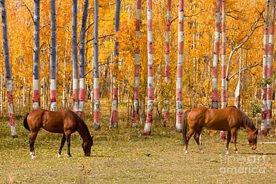 Horses Photograph - Patriotic Autumn by James BO  Insogna