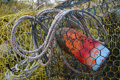 Etc. Photograph - Patterns And Colors Of Vintage Crab by Stephen St. John