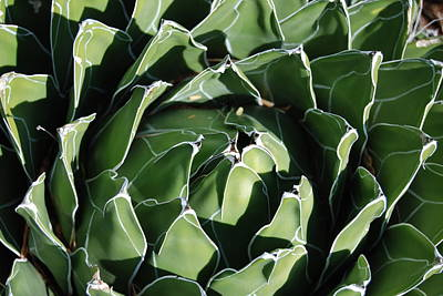 Photograph - Patterns In Green by Cheryl Fecht