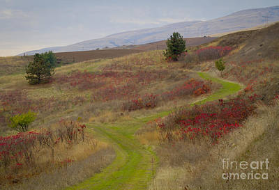 Paved In Green Print by Idaho Scenic Images Linda Lantzy
