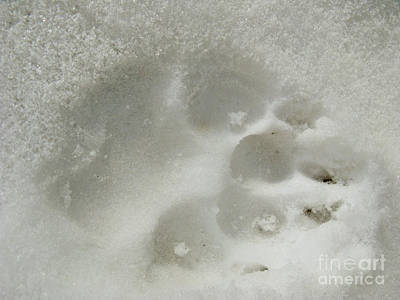 Photograph - Paw In The Snow 01 by Ausra Huntington nee Paulauskaite