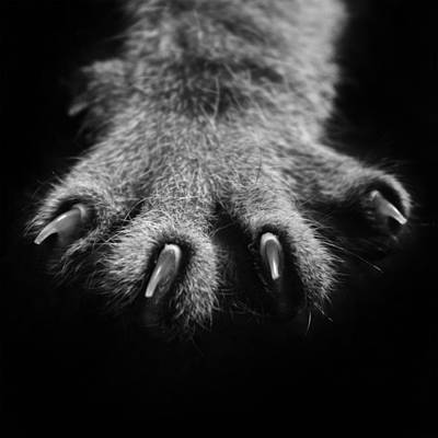 Photograph - Paw Power by Kavitha