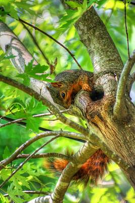 Squirrel Photograph - Paws And Tail by Ester  Rogers