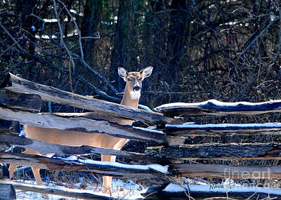 Art Print featuring the photograph Pea Ridge Battlefield Deer by Nava Thompson