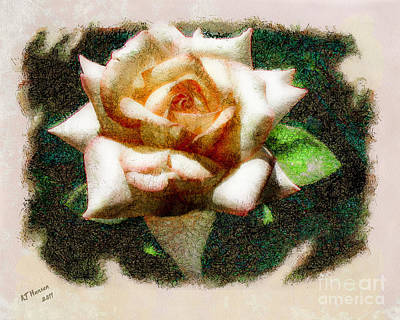 Peace Rose Art Print by Arne Hansen