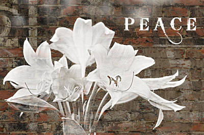 Photograph - Peace by Rose  Hill