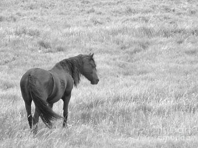 Photograph - Peaceful Black Beauty Black And White by Donna Parlow