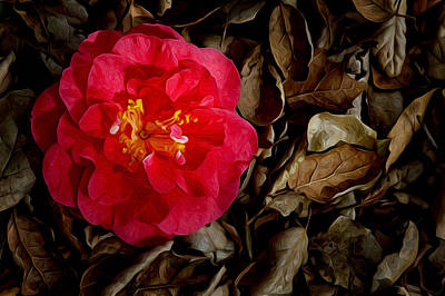 Photograph - Peaceful Camellia by Bobbi Feasel