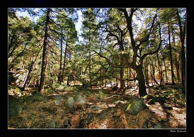 Photograph - Peaceful Forest by Blake Richards