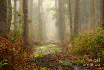 Photograph - Peaceful Pathway by Jill Smith