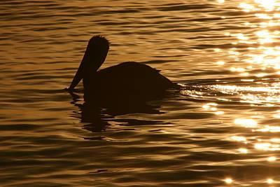 Photograph - Peaceful Swim by Andrea Linquanti