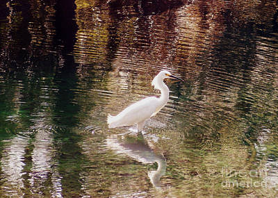 Art Print featuring the photograph Peaceful Waters by Lydia Holly